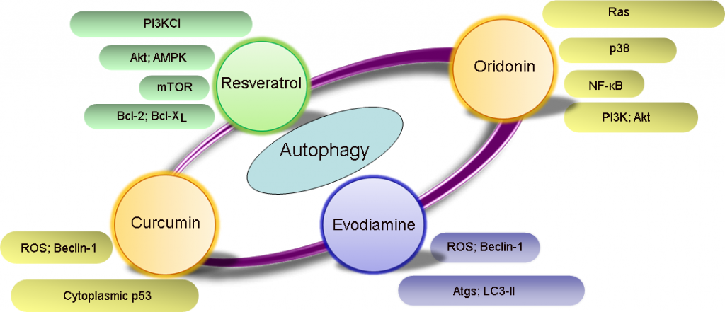 autophagy inducers